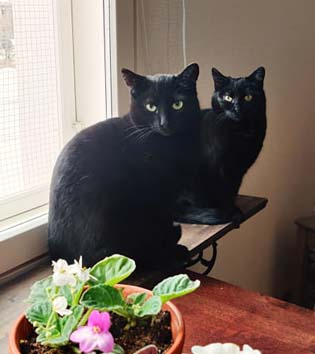 Milla-Makia ja Lucifer
