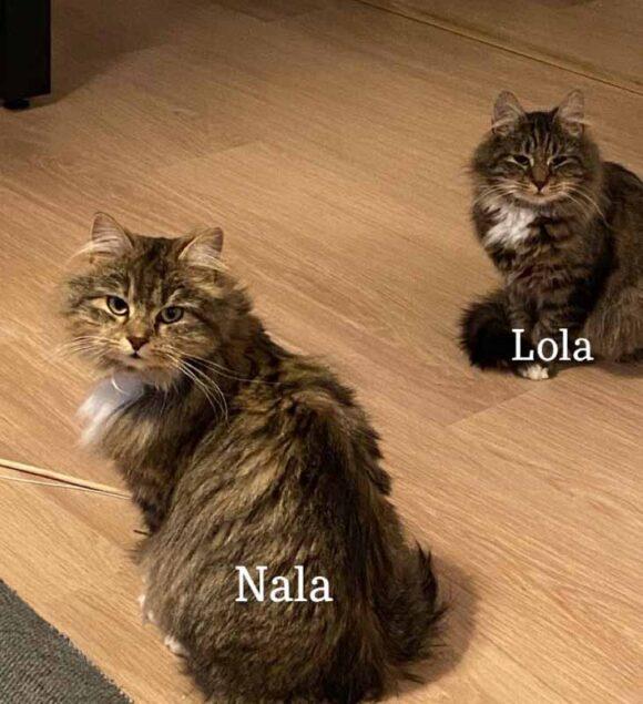 Nala ja Lola