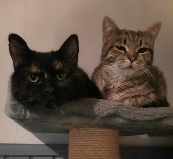 Fiona ja Lilli